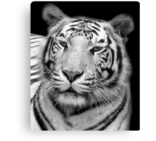 White Tiger – Black & White Canvas Print