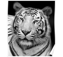 White Tiger – Black & White Poster