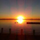 pelicans at sunset in toukley by jane walsh