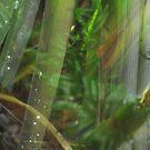 Pond Reflection by MiloAddict