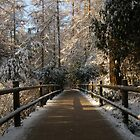 Centerparcs in the Snow 02 by James Kowacz