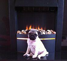 my pug puppy Rosie  by beckylatter