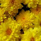 Yellow Mums by WildestArt