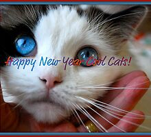 Happy New Year Cool Cats! by Carol Clifford