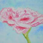 Pink Carnation by Deborah Pass