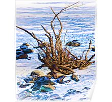The bramble in snow-Banff, Canada Poster