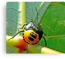 Rain Forest Insect. Canvas Print