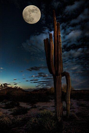 By the Light of the Moon  by Saija  Lehtonen