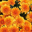 Orange Mums by WildestArt