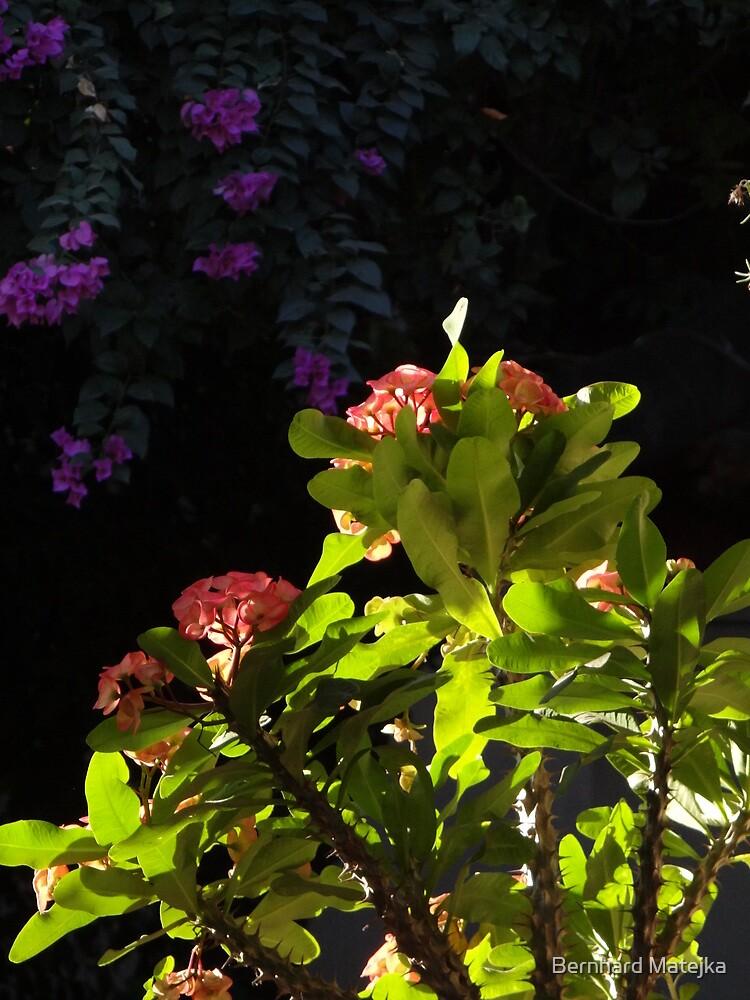 Plants And Flowers In Sunlight And Shade - Plantas Y Flores En La Luy Del Sol Y La Sombra by Bernhard Matejka