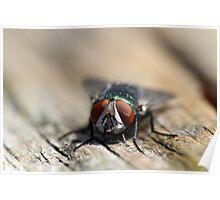 Do flies wear contact lenses? Poster