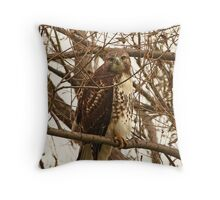 Red-Tailed Hawk Looking Right at Me Throw Pillow