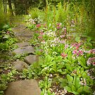 Primula Path by Marilyn Cornwell