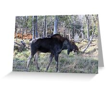 Male moose in the woods Greeting Card