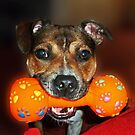 Santa left me this squeaky Toy by Elaine123