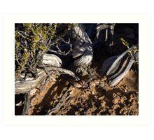 Horned Adder snake in bush in Karoo veld Art Print