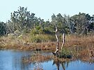 Buxton Salt Marsh - Outer Banks NC  by MotherNature