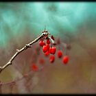 Berries by apsjphotography