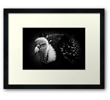 Rueppell's Vulture: After a shower (black version) Framed Print