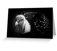 Rueppell's Vulture: After a shower (black version) Greeting Card