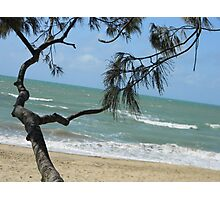 beach,tree,ocean Photographic Print
