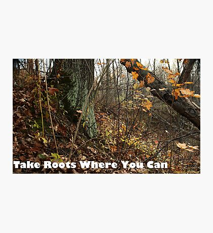 Take Roots Where You Can Photographic Print