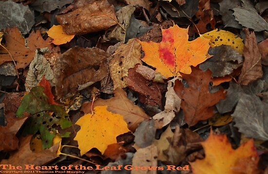The Heart of the Leaf Grows Red by Thomas Murphy