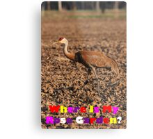 Where Is My Rose Garden? Metal Print