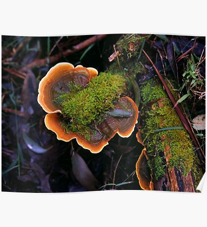 Plate Fungus Poster
