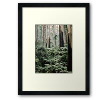 Mountain Ash and Tree Ferns, Sherbrooke Forest. Framed Print