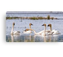I Am Tired Of Sticking My Neck Out For You ! Canvas Print