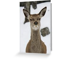 Standing Watch Greeting Card