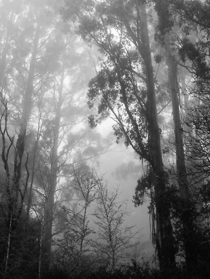 Mountain Ash in the Mist by Alex Fricke