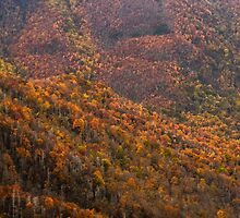 Great Smoky Mountains National Park by Chaney Swiney
