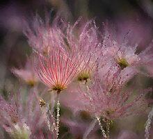 """Iced Pink"" ~ Apache Plume by Vicki Pelham"