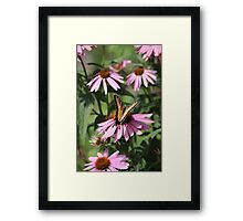 Echinacea with Butterfly 8835 Framed Print