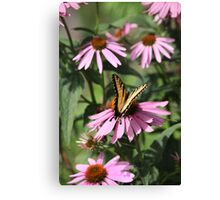Echinacea with Butterfly 8835 Canvas Print