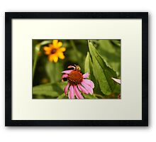 Echinacea with Bee 8670 Framed Print