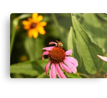 Echinacea with Bee 8670 Metal Print