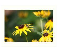 Black Eyed Susan with Beetle 8624 Art Print