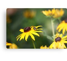 Black Eyed Susan with Beetle 8624 Metal Print