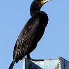 Cormorant by kibishipaul