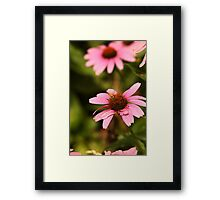 Echinacea with Bee 8674 Framed Print