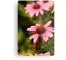 Echinacea with Bee 8674 Metal Print