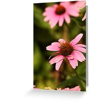 Echinacea with Bee 8674 Greeting Card