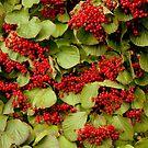 Vine Berries by Deborah Crew-Johnson