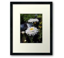 Chrysanthemum 6777 Framed Print