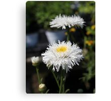 Chrysanthemum 6777 Canvas Print