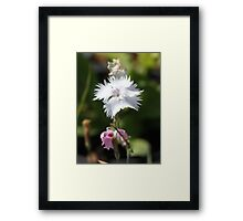 Carnation 6788 Framed Print
