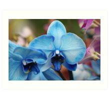 Blue Orchid 7053 Art Print